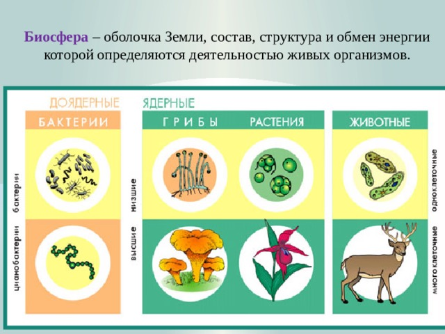 Биосфера  – оболочка Земли, состав, структура и обмен энергии которой определяются деятельностью живых организмов.