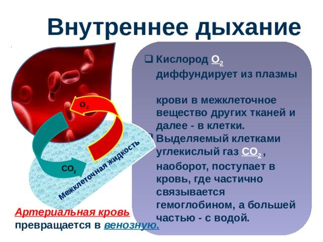 O 2 Межклеточная жидкость Внутреннее дыхание Кислород O 2  диффундирует из плазмы  крови в межклеточное  вещество других тканей и  далее - в клетки. Выделяемый клетками углекислый газ CO 2  , наоборот, поступает в кровь, где частично связывается гемоглобином, а большей частью - с водой. CO 2 Артериальная кровь превращается в венозную. 29
