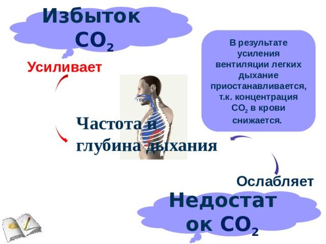 Избыток СО 2 В результате усиления вентиляции легких дыхание приостанавливается, т.к. концентрация CO 2 в крови снижается.  Усиливает Частота и глубина дыхания Ослабляет Недостаток СО 2