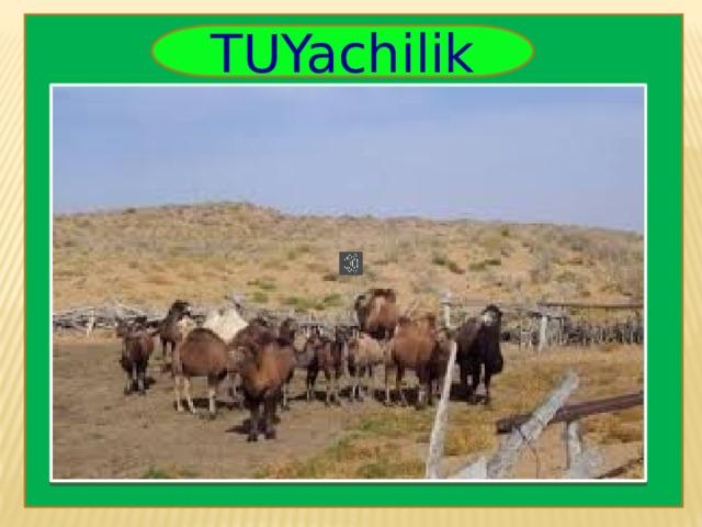 TUYachilik