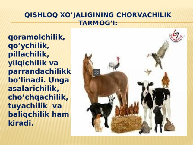 Qishloq xo'jaligining chorvachilik tarmog'I: