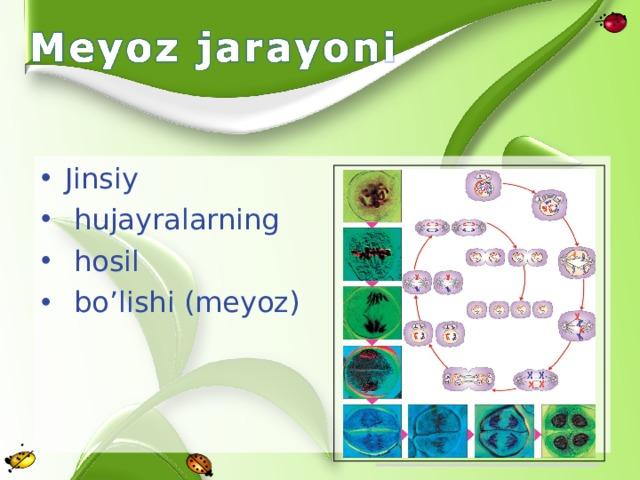 Jinsiy  hujayralarning  hosil  bo'lishi (meyoz)