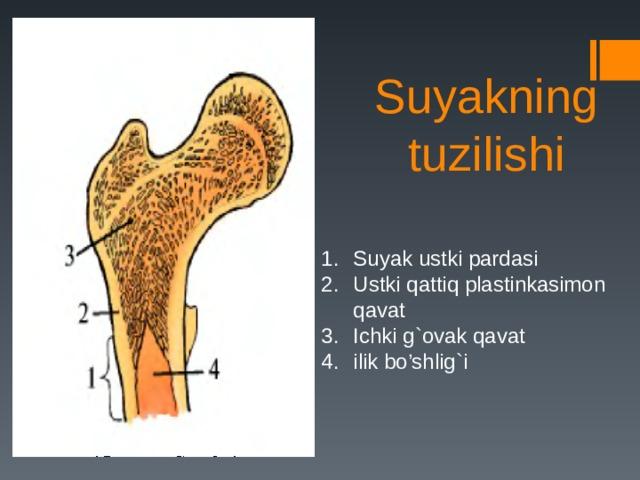Suyakning tuzilishi