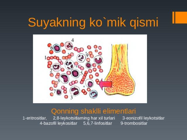 Suyakning ko`mik qismi Qonning shaklli elimentlari 1-eritrositlar, 2,8-leykotsitlarning har xil turlari 3-eonizofil leykotsitlar 4-bazofil leykositlar 5,6,7-linfositlar 9-trombositlar