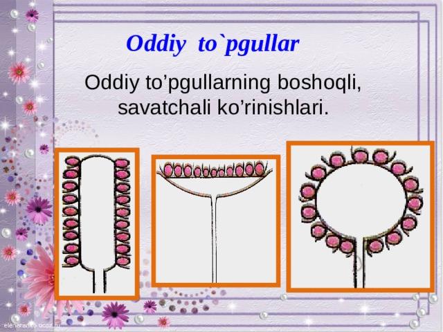 Oddiy to`pgullar Oddiy to'pgullarning boshoqli,  savatchali ko'rinishlari.