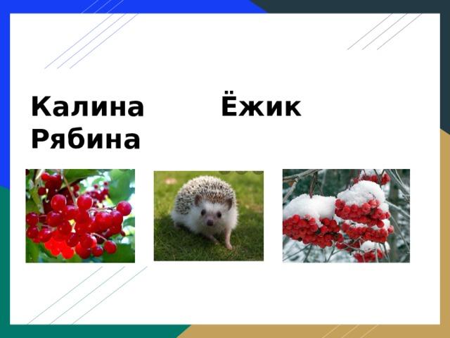 Калина Ёжик Рябина