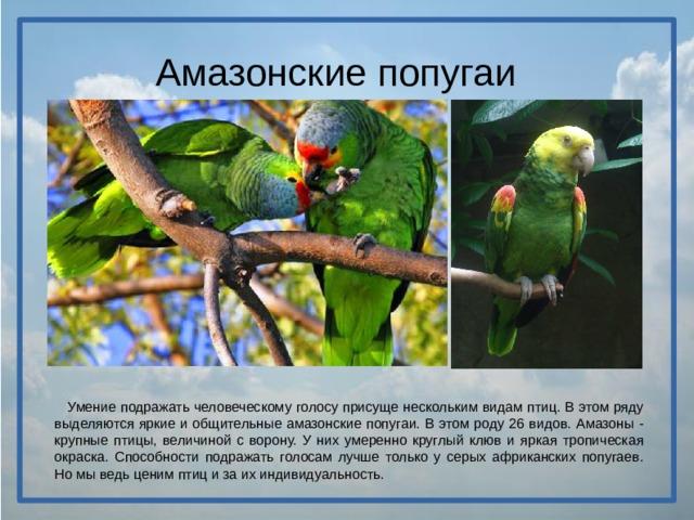 Амазонские попугаи  Умение подражать человеческому голосу присуще нескольким видам птиц. В этом ряду выделяются яркие и общительные амазонские попугаи. В этом роду 26 видов. Амазоны - крупные птицы, величиной с ворону. У них умеренно круглый клюв и яркая тропическая окраска. Способности подражать голосам лучше только у серых африканских попугаев. Но мы ведь ценим птиц и за их индивидуальность.