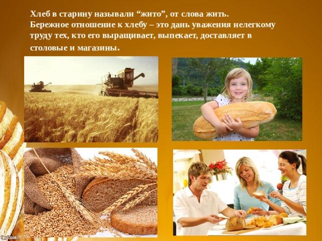 """Хлеб в старину называли """"жито"""", от слова жить. Бережное отношение к хлебу – это дань уважения нелегкому труду тех, кто его выращивает, выпекает, доставляет в столовые и магазины ."""