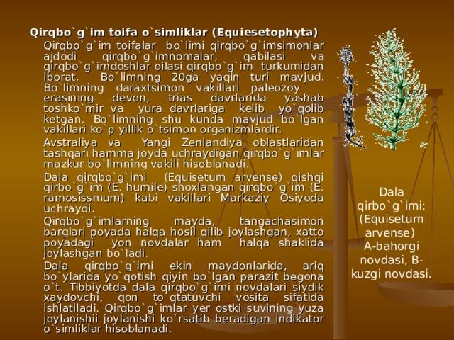 Qirqbo`g`im toifa o`simliklar ( E quiesetophyta)   Qirqbo`g`im toifalar bo`limi qirqbo`g`imsimonlar ajdodi qirqbo`g`imnomalar, qabilasi va qirqbo`g`imdoshlar oilasi qirqbo`g`im turkumidan iborat. Bo`limning 20ga yaqin turi mavjud. Bo`limning daraxtsimon vakillari paleozoy erasining devon, trias davrlarida yashab toshko`mir va yura davrlariga kelib yo`qolib ketgan. Bo`limning shu kunda mavjud bo`lgan vakillari ko`p yillik o`tsimon organizmlardir.   Avstraliya va Yangi Zenlandiya oblastlaridan tashqari hamma joyda uchraydigan qirqbo`g`imlar mazkur bo`limning vakili hisoblanadi.   Dala qirqbo`g`imi (Equisetum arvense) qishqi qirbo`g`im (E. humile) shoxlangan qirqbo`g`im (E. ramosissmum) kabi vakillari Markaziy Osiyoda uchraydi.   Qirqbo`g`imlarning mayda, tangachasimon barglari poyada halqa hosil qilib joylashgan, xatto poyadagi yon novdalar ham halqa shaklida joylashgan bo`ladi.   Dala qirqbo`g`imi ekin maydonlarida, ariq bo`ylarida yo`qotish qiyin bo`lgan parazit begona o`t. Tibbiyotda dala qirqbo`g`imi novdalari siydik xaydovchi, qon to`qtatuvchi vosita sifatida ishlatiladi. Qirqbo`g`imlar yer ostki suvining yuza joylanishii joylanishi ko`rsatib beradigan indikator o`simliklar hisoblanadi. Dala qirbo`g`imi: (Equisetum arvense) А-bahorgi novdasi, B- kuzgi novdasi.