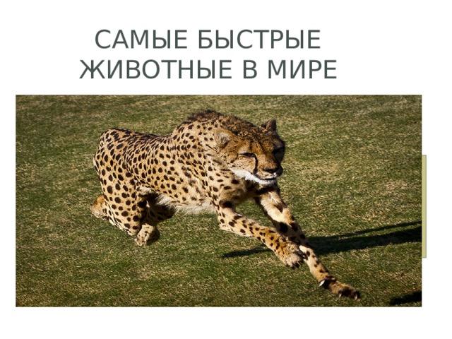 Самые быстрые животные в мире
