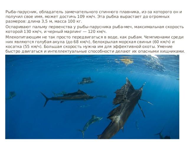 Рыба-парусник, обладатель замечательного спинного плавника, из-за которого он и получил свое имя, может достичь 109 км∕ч. Эта рыбка вырастает до огромных размеров: длина 3,5 м, масса 100 кг. Оспаривают пальму первенства у рыбы-парусника рыба-меч, максимальная скорость которой 130 км∕ч, и черный марлинг — 120 км∕ч. Млекопитающим не так просто передвигаться в воде, как рыбам. Чемпионами среди них являются голубая акула (до 68 км∕ч), белокрылая морская свинья (60 км∕ч) и косатка (55 км∕ч). Большая скорость нужна им для эффективной охоты. Умение быстро двигаться и интеллектуальные способности делают их опасными хищниками.