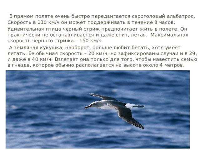 В прямом полете очень быстро передвигается сероголовый альбатрос. Скорость в 130 км∕ч он может поддерживать в течение 8 часов. Удивительная птица черный стриж предпочитает жить в полете. Он практически не останавливается и даже спит, летая. Максимальная скорость черного стрижа – 150 км∕ч.  А земляная кукушка, наоборот, больше любит бегать, хотя умеет летать. Ее обычная скорость – 20 км∕ч, но зафиксированы случаи и в 29, и даже в 40 км∕ч! Взлетает она только для того, чтобы навестить семью в гнезде, которое обычно располагается на высоте около 4 метров.