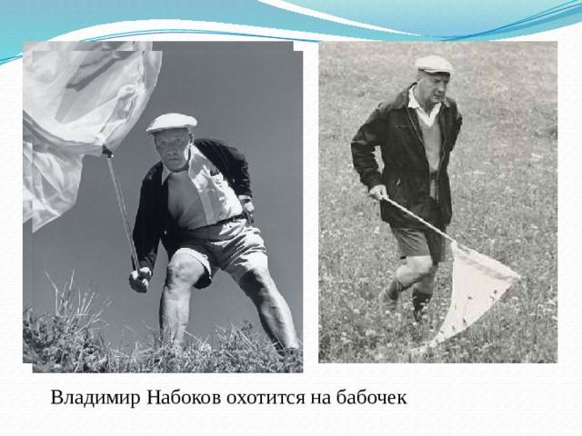 Владимир Набоков охотится на бабочек