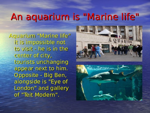 An aquarium is