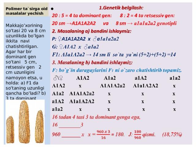 Polimer ta`sirga oid masalalar yechish  1.Genetik belgilash: 20 : 5 = 4 ta dominant gen: 8 : 2 = 4 ta retsessiv gen: 20 sm → A1A1A2A2 va 8 sm → a1a1a2a2 genotipli  2. Masalaning a) bandini ishlaymiz: P: ♀ A1A1A2A2 x ♂ a 1a1a2a2 G: ♀A1A2 x ♂a1a2 F1: A1a1A2a2 → 14 sm li so`ta ya`ni (5+2)+(5+2) =14 3. Masalaning b) bandini ishlaymiz: F 2 bo`g`in duragaylarini F 1 ni o`zaro chatishtirib topamiz. ♂ \♀ A1A2 A1a2 a1A2 a1a2 A1A2 x A1A1A2a2 A1a1A2A2 x A1a2 A1A1A2a2 x x x a1A2 A1a1A2A2 x x x a1a2 x x x x 16 tadan 4 tasi 3 ta dominant genga ega, 16 ________3 960 _______ x x = = 180. J: qismi. (18,75%)  Makkajo'xorining so'tasi 20 va 8 cm uzunlikda bo'lgan ikkita navi chatishtirilgan. Agar har bir dominant gen so'tani 5 cm, retsessiv gen 2 cm uzunligini namoyon etsa, u holda: a) F1 da so'taning uzunligi qancha bo'ladi? b) 3 ta dominant genli formalar F 2 dagi 960 ta o'simlikdan necha qismini tashkil etadi?