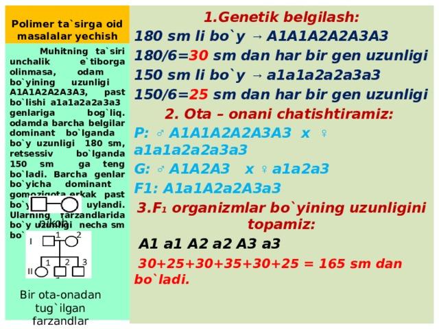Polimer ta`sirga oid masalalar yechish 1.Genetik belgilash: 180 sm li bo`y → A1A1A2A2A3A3 180/6= 30 sm dan har bir gen uzunligi 150 sm li bo`y → a1a1a2a2a3a3 150/6= 25 sm dan har bir gen uzunligi 2. Ota – onani chatishtiramiz: P: ♂ A1A1A2A2A3A3 x ♀ a1a1a2a2a3a3 G: ♂ A1A2A3 x ♀ a1a2a3 F1: A1a1A2a2A3a3 3.F 1 organizmlar bo`yining uzunligini topamiz:  A1 a1 A2 a2 A3 a3  30+25+30+35+30+25 = 165 sm dan bo`ladi.  Muhitning ta`siri unchalik e`tiborga olinmasa, odam bo`yining uzunligi A1A1A2A2A3A3, past bo`lishi a1a1a2a2a3a3 genlariga bog`liq. odamda barcha belgilar dominant bo`lganda bo`y uzunligi 180 sm, retsessiv bo`lganda 150 sm ga teng bo`ladi. Barcha genlar bo`yicha dominant gomozigota erkak past bo`yli ayolga uylandi. Ularning farzandlarida bo`y uzunligi necha sm bo`ladi? nikoh Bir ota-onadan tug`ilgan farzandlar