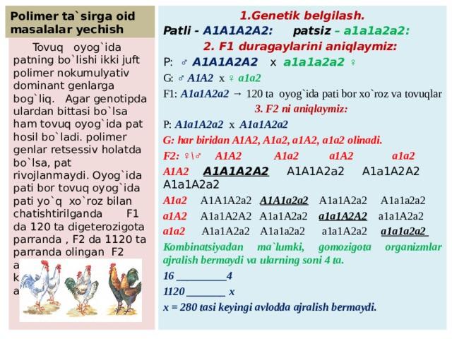 Polimer ta`sirga oid masalalar yechish 1.Genetik belgilash. Patli - A1A1A2A2: patsiz  – a1a1a2a2: 2. F1 duragaylarini aniqlaymiz: P: ♂ A1A1A2A2 x a1a1a2a2 ♀ G: ♂ A1A2 x ♀ a1a2 F1: A1a1A2a2 → 120 ta oyog`ida pati bor xo`roz va tovuqlar 3. F2 ni aniqlaymiz: P: A1a1A2a2 x A1a1A2a2 G: har biridan A1A2, A1a2, a1A2, a1a2 olinadi. F2: ♀\♂ A1A2 A1a2 a1A2 a1a2 A1A2  A1A1A2A2 A1A1A2a2 A1a1A2A2 A1a1A2a2 A1a2 A1A1A2a2 A1A1a2a2 A1a1A2a2 A1a1a2a2 a1A2 A1a1A2A2 A1a1A2a2 a1a1A2A2 a1a1A2a2 a1a2 A1a1A2a2 A1a1a2a2 a1a1A2a2 a1a1a2a2 Kombinatsiyadan ma`lumki, gomozigota organizmlar ajralish bermaydi va ularning soni 4 ta. 16 _________4 1120 _______ x x = 280 tasi keyingi avlodda ajralish bermaydi.  Tovuq oyog`ida patning bo`lishi ikki juft polimer nokumulyativ dominant genlarga bog`liq. Agar genotipda ulardan bittasi bo`lsa ham tovuq oyog`ida pat hosil bo`ladi. polimer genlar retsessiv holatda bo`lsa, pat rivojlanmaydi. Oyog`ida pati bor tovuq oyog`ida pati yo`q xo`roz bilan chatishtirilganda F1 da 120 ta digeterozigota parranda , F2 da 1120 ta parranda olingan F2 avlodning nechtasi keyingi bo`g`inda ajralish bermaydi?