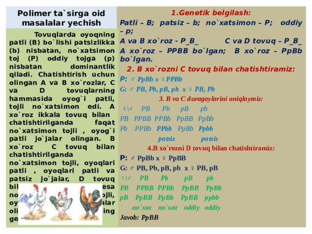 Polimer ta`sirga oid masalalar yechish 1.Genetik belgilash: Patli – B; patsiz – b; no`xatsimon – P; oddiy – p; A va B xo`roz - P_B_ C va D tovuq – P_B_ A xo`roz – PPBB bo`lgan; B xo`roz – PpBb bo`lgan. 2. B xo`rozni C tovuq bilan chatishtiramiz: P: ♂ PpBb x ♀PPBb G: ♂ PB, Pb, pB, pb x ♀ PB, Pb 3. B va C duragaylarini aniqlaymiz: ♀ \♂ PB Pb pB pb PB PPBB PPBb PpBB PpBb Pb PPBb PPbb PpBb Ppbb  patsiz patsiz 4.B xo`rozni D tovuq bilan chatishtiramiz: P: ♂ PpBb x ♀ PpBB G: ♂ PB, Pb, pB, pb x ♀ PB, pB ♀ \♂ PB Pb pB pb PB PPBB PPBb PpBB PpBb pB PpBB PpBb PpBB ppbb  no`xat no`xat oddiy oddiy Javob: PpBB   Tovuqlarda oyoqning patli (B) bo`lishi patsizlikka (b) nisbatan, no`xatsimon toj (P) oddiy tojga (p) nisbatan dominantlik qiladi. Chatishtirish uchun olingan A va B xo`rozlar, C va D tovuqlarning hammasida oyog`i patli, tojli no`xatsimon edi. A xo`roz ikkala tovuq bilan chatishtirilganda faqat no`xatsimon tojli , oyog`i patli jo`jalar olingan. B xo`roz C tovuq bilan chatishtirilganda no`xatsimon tojli, oyoqlari patli , oyoqlari patli va patsiz jo`jalar, D tovuq bilan chatishtirilganda esa no`xatsimon va oddiy tojli, oyoqlari patli jo`jalar olingan. D tovuqning genotipini toping.