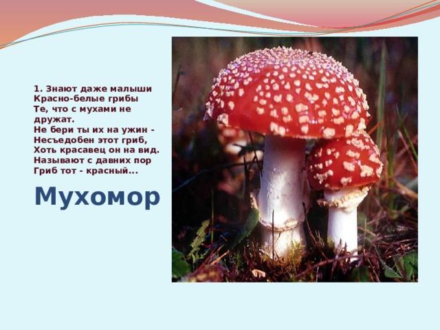 1.Знают даже малыши  Красно-белые грибы  Те, что с мухами не дружат.  Не бери ты их на ужин -  Несъедобен этот гриб,  Хоть красавец он на вид.  Называют с давних пор  Гриб тот - красный... Мухомор