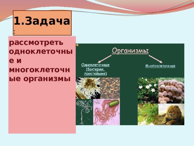 1.Задача : рассмотреть одноклеточные и многоклеточные организмы