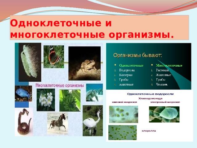 Одноклеточные и многоклеточные организмы.