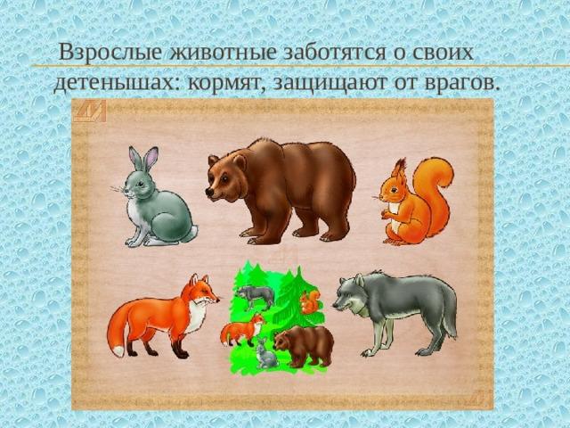Взрослые животные заботятся о своих детенышах: кормят, защищают от врагов.