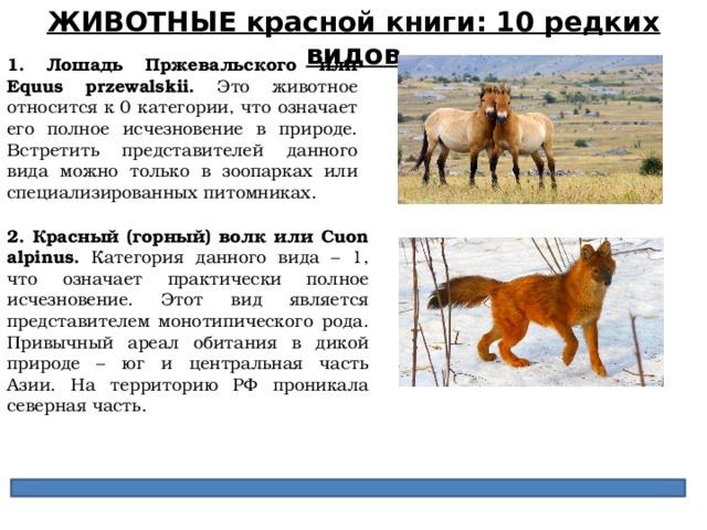 ЖИВОТНЫЕ красной книги: 10 редких видов 1. Лошадь Пржевальского или Equus przewalskii. Это животное относится к 0 категории, что означает его полное исчезновение в природе. Встретить представителей данного вида можно только в зоопарках или специализированных питомниках. 2. Красный (горный) волк или Cuon alpinus.  Категория данного вида – 1, что означает практически полное исчезновение. Этот вид является представителем монотипического рода. Привычный ареал обитания в дикой природе – юг и центральная часть Азии. На территорию РФ проникала северная часть.
