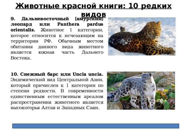Животные красной книги: 10 редких видов 9. Дальневосточный (амурский) леопард или Panthera pardus orientalis. Животное 1 категории, которое относится к исчезающим на территории РФ. Обычным местом обитания данного вида животного является южная часть Дальнего Востока. 10. Снежный барс или Uncia uncia. Эндемический вид Центральной Азии, который причислен к 1 категории по степени редкости. В современности единственным естественным ареалом распространения животного является высокогорья Алтая и Западных Саян.