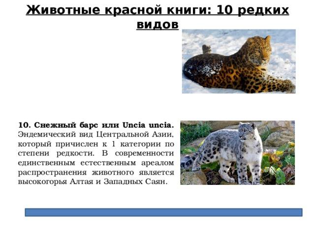 Животные красной книги: 10 редких видов 10. Снежный барс или Uncia uncia. Эндемический вид Центральной Азии, который причислен к 1 категории по степени редкости. В современности единственным естественным ареалом распространения животного является высокогорья Алтая и Западных Саян.