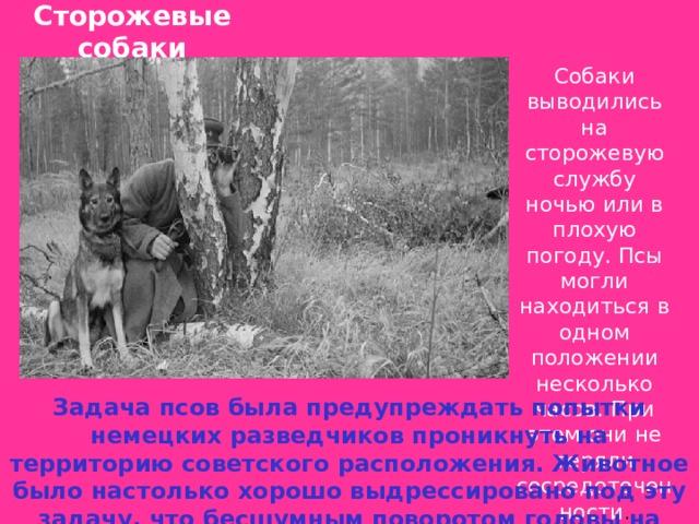 Сторожевые собаки    Собаки выводились на сторожевую службу ночью или в плохую погоду. Псы могли находиться в одном положении несколько часов. При этом они не теряли сосредоточенности . Задача псов была предупреждать попытки немецких разведчиков проникнуть на территорию советского расположения. Животное было настолько хорошо выдрессировано под эту задачу, что бесшумным поворотом головы на несколько градусов, давал команду своему проводнику.