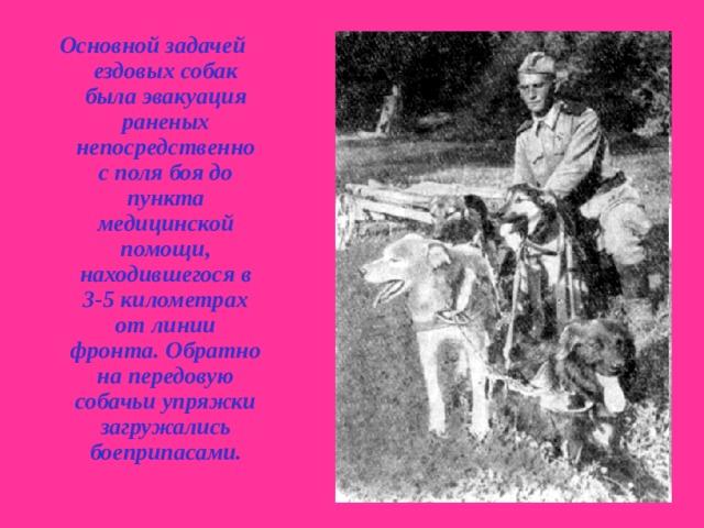 Основной задачей ездовых собак была эвакуация раненых непосредственно с поля боя до пункта медицинской помощи, находившегося в 3-5 километрах от линии фронта. Обратно на передовую собачьи упряжки загружались боеприпасами.