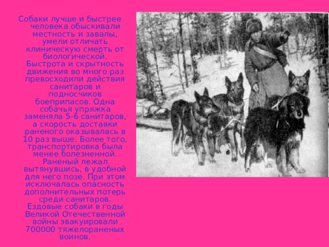 Собаки лучше и быстрее человека обыскивали местность и завалы, умели отличать клиническую смерть от биологической. Быстрота и скрытность движения во много раз превосходили действия санитаров и подносчиков боеприпасов. Одна собачья упряжка заменяла 5-6 санитаров, а скорость доставки раненого оказывалась в 10 раз выше. Более того, транспортировка была менее болезненной. Раненый лежал вытянувшись, в удобной для него позе. При этом исключалась опасность дополнительных потерь среди санитаров. Ездовые собаки в годы Великой Отечественной войны эвакуировали 700000 тяжелораненых воинов.