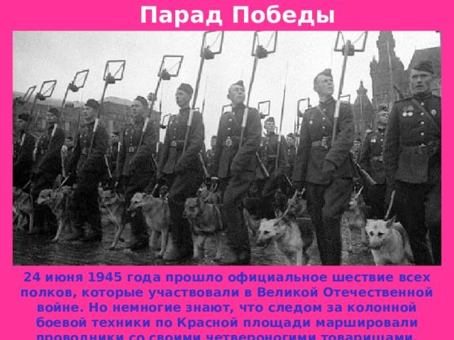 Парад Победы 24 июня 1945 года прошло официальное шествие всех полков, которые участвовали в Великой Отечественной войне. Но немногие знают, что следом за колонной боевой техники по Красной площади маршировали проводники со своими четвероногими товарищами.