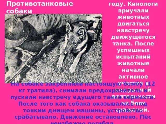 Псов взяли на вооружение ещё в 1935 году. Кинологи приучали животных двигаться навстречу движущегося танка. После успешных испытаний животные начали активное участие в подрывной деятельности на боях сражений. Противотанковые  собаки  На собаке закрепляли настоящую бомбу (12 кг тратила), снимали предохранитель и пускали навстречу едущего танка вермахта. После того как собака оказывалась под тонким днищем машины, устройство срабатывало. Движение остановлено. Пёс неизбежно погибал.