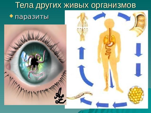Тела других живых организмов