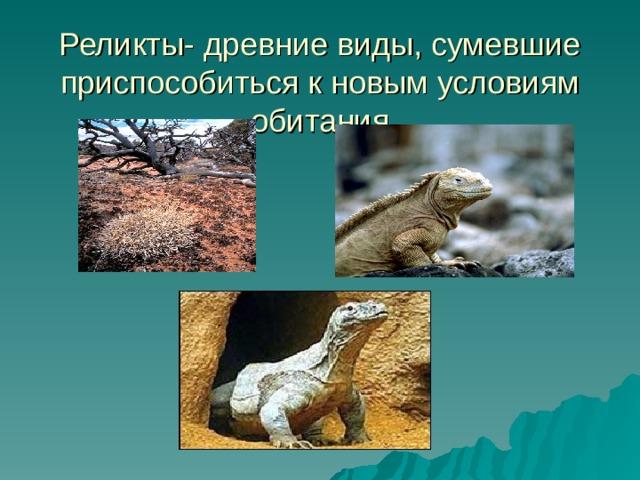Реликты- древние виды, сумевшие приспособиться к новым условиям обитания