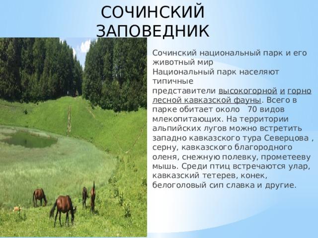 СОЧИНСКИЙ ЗАПОВЕДНИК  Сочинский национальный парк и его животный мир  Национальный парк населяют типичные представители высокогорной  и  горнолесной кавказской фауны . Всего в парке обитает около 70 видов млекопитающих. На территории альпийских лугов можно встретить западно кавказского тура Северцова , серну, кавказского благородного оленя, снежную полевку, прометееву мышь. Среди птиц встречаются улар, кавказский тетерев, конек, белоголовый сип славка и другие.