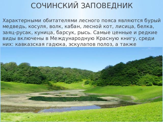 СОЧИНСКИЙ ЗАПОВЕДНИК  Характерными обитателями лесного пояса являются бурый медведь, косуля, волк, кабан, лесной кот, лисица, белка, заяц-русак, куница, барсук, рысь. Самые ценные и редкие виды включены в Международную Красную книгу, среди них: кавказская гадюка, эскулапов полоз, а также кавказская крестовка.