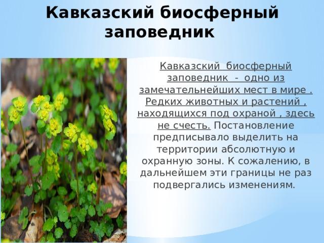 Кавказский биосферный заповедник Кавказский биосферный заповедник - одно из замечательнейших мест в мире . Редких животных и растений , находящихся под охраной , здесь не счесть. Постановление предписывало выделить на территории абсолютную и охранную зоны. К сожалению, в дальнейшем эти границы не раз подвергались изменениям.