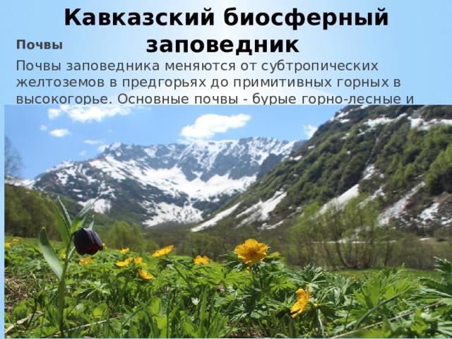Кавказский биосферный заповедник Почвы Почвы заповедника меняются от субтропических желтоземов в предгорьях до примитивных горных в высокогорье. Основные почвы - бурые горно-лесные и горно-луговые.