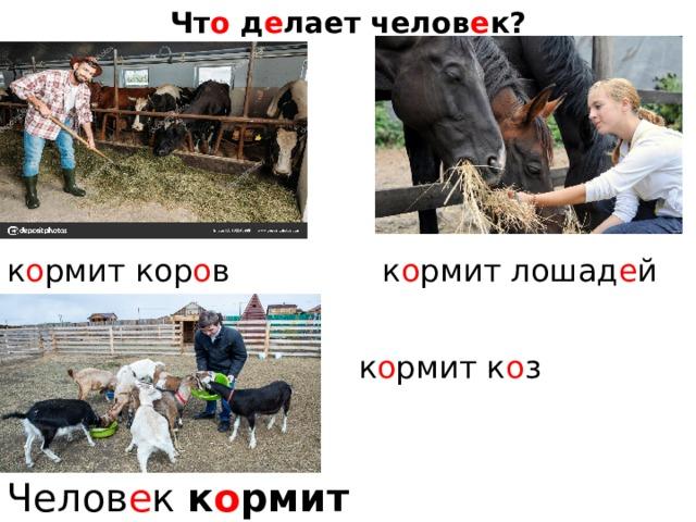 Чт о д е лает челов е к? к о рмит кор о в к о рмит лошад е й  к о рмит к о з Челов е к к о рмит жив о тных.