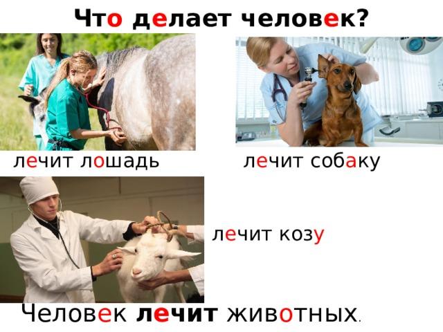Чт о д е лает челов е к? л е чит л о шадь л е чит соб а ку л е чит коз у Челов е к л е чит жив о тных .