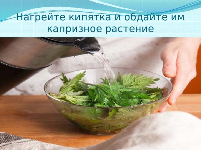 Нагрейте кипятка и обдайте им капризное растение
