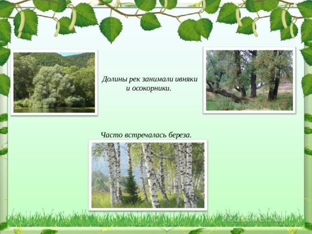 Долины рек занимали ивняки и осокорники.     Часто встречалась береза.
