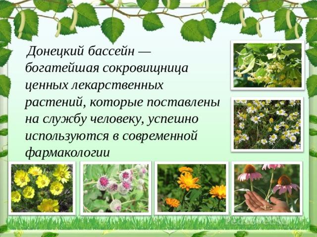 Донецкий бассейн — богатейшая сокровищница ценных лекарственных растений, которые поставлены на службу человеку, успешно используются в современной фармакологии