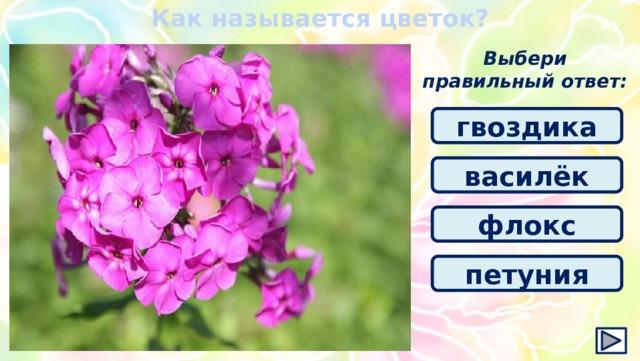 Как называется цветок? Выбери правильный ответ: гвоздика василёк флокс петуния