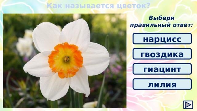 Как называется цветок? Выбери правильный ответ: нарцисс гвоздика гиацинт лилия