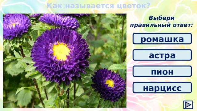 Как называется цветок? Выбери правильный ответ: ромашка астра пион нарцисс