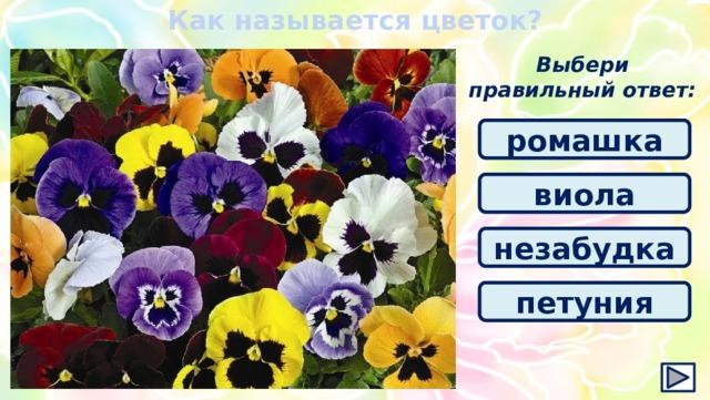 Как называется цветок? Выбери правильный ответ: ромашка виола незабудка петуния