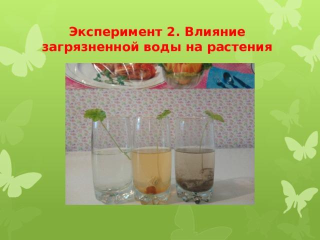 Эксперимент 2. Влияние загрязненной воды на растения